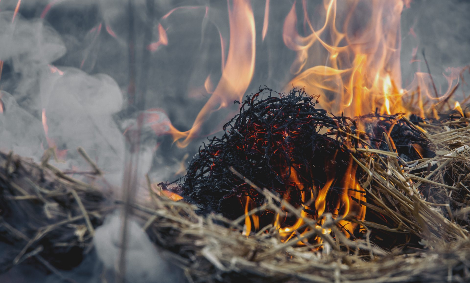 """Sympozjum """"Stop wypalaniu traw"""" – Sosnowiec"""