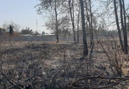 Już 11,5 tysiąca pożarów traw w tym roku